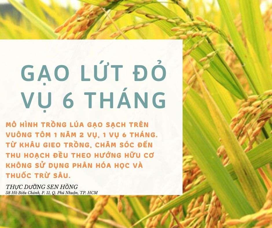 Gạo lứt là gạo gì? Gạo lứt đỏ, gạo lứt trắng, gạo lứt tím, gạo huyết rồng khác nhau không