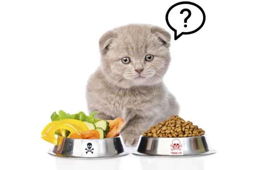 Mèo Con nên và không nên ăn loại thức ăn gì?