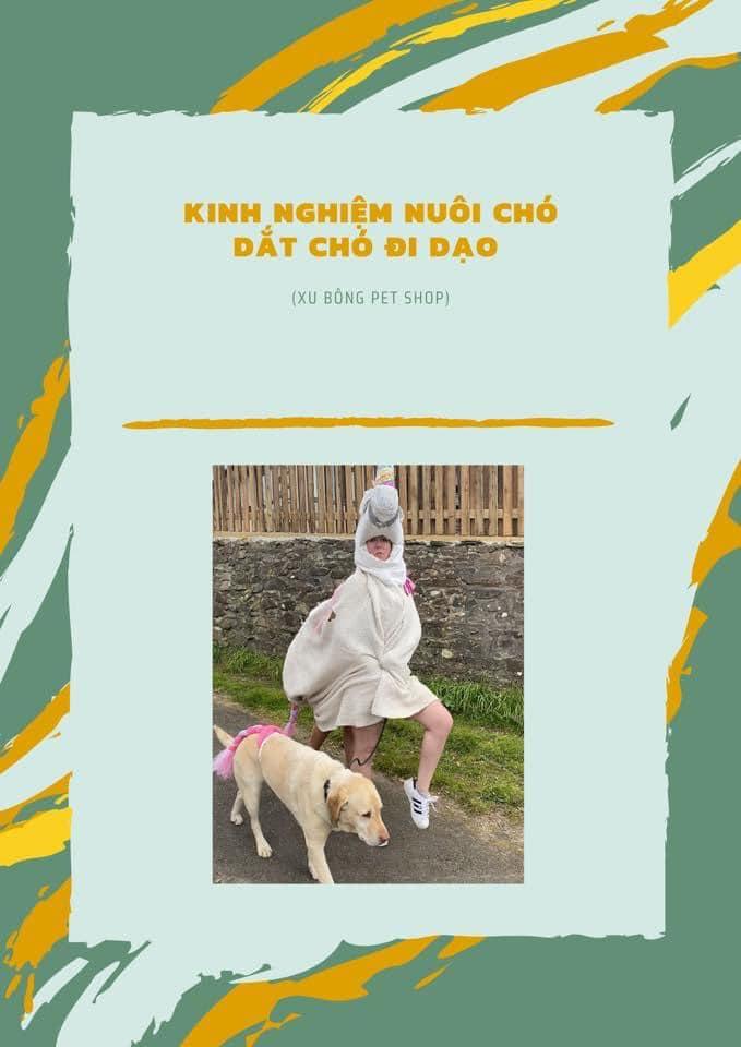 Infographic Kinh Nghiệm Nuôi Chó Dắt Chó Đi Bộ
