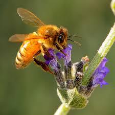 10 lợi ích sức khỏe đáng ngạc nhiên của mật ong