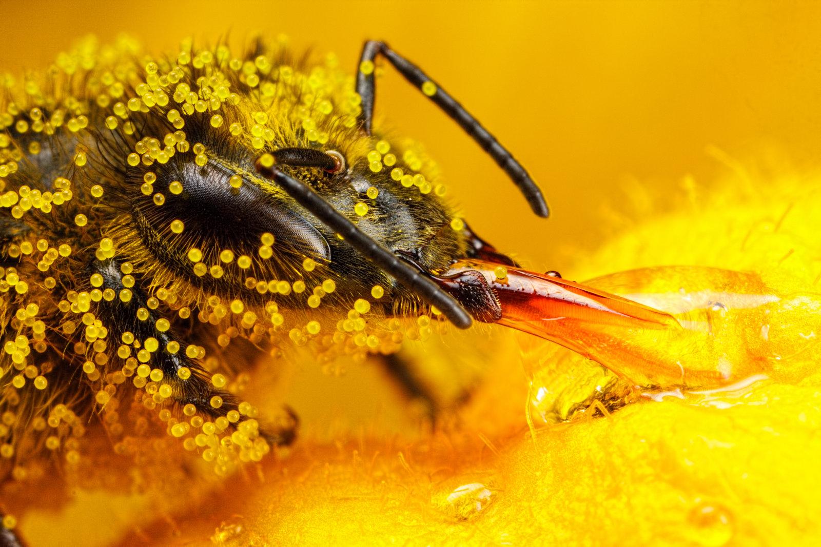 Sự thật về mật ong
