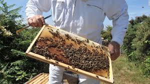 Đặc điểm nổi bật của keo ong nhập khẩu Hàn Quốc Unique propolis