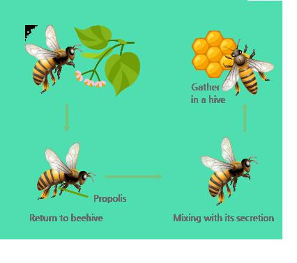 Keo ong là gì?